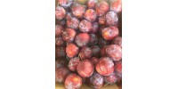Prune japoneze