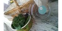 *Amestec de verdețuri pentru salată
