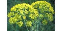 Flori de marar verzi